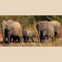 Safari & Découvertes NAZINGA